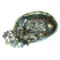Tumbled and Polished Paua Pieces Fines TPSF 5-15mm